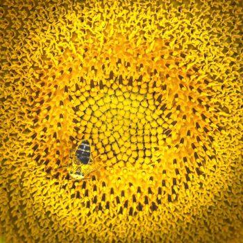 La spirale del giallo...