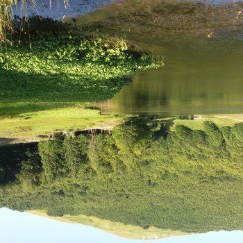 Lago Calamone-la magia verde sotto-sopra