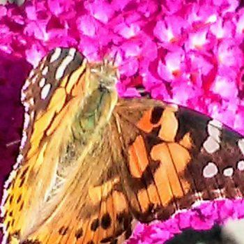 Colori, farfalla su fiori