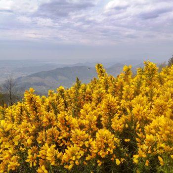 Primavera sul Monte Faeta