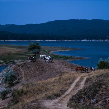 Cavalli sul lago Cecita
