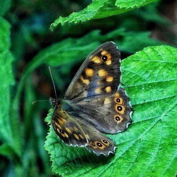 La leggerezza della farfalla