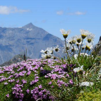 Balcone fiorito con vista sul Rocciamelone