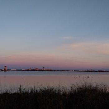 La pace dei fenicotteri all'alba
