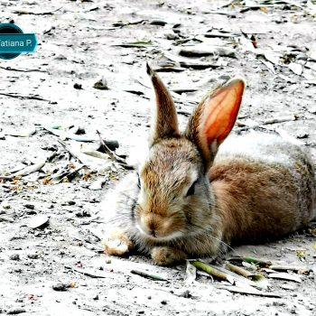 Il coniglio selvatico si mette in posa
