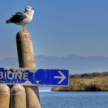 Il gabbiano che aspetta i naviganti.