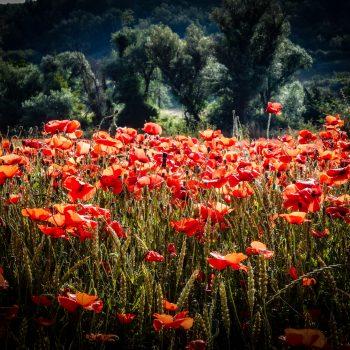 Il rosso è la cura definitiva per la tristezza. (Bill Blass)