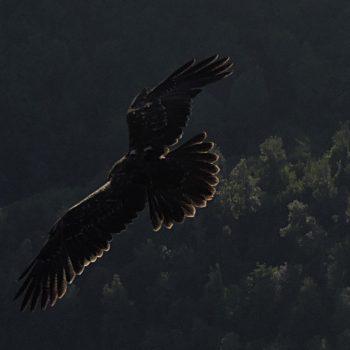 Aquila  ..volo notturno..