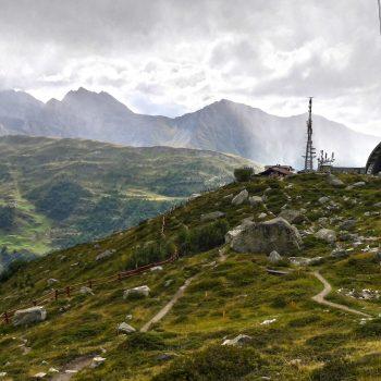 Saussurea: il giardino botanico più alto d'Europa