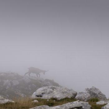 Profilo nella nebbia