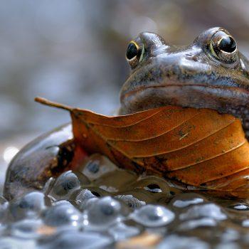 Bored frog