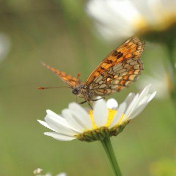 Landing on the Flower